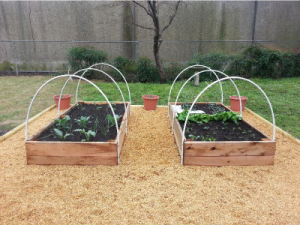 Raised-Bed Garden in Argenta